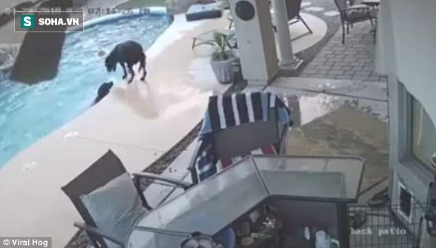Chủ vắng nhà, chó rơi xuống hồ suýt chết đuối, bất ngờ may mắn xảy ra - Ảnh 1.