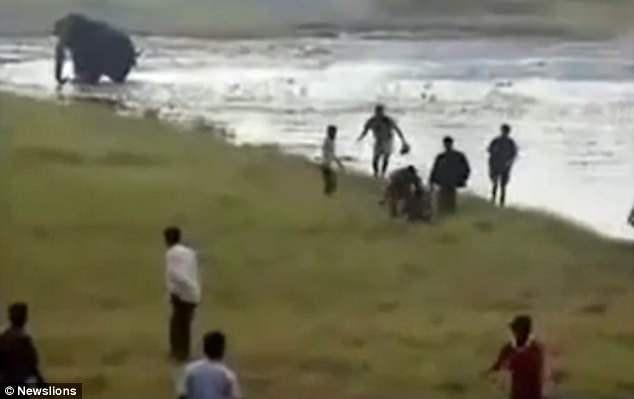 Lỡ bơi trong hồ có voi, người đàn ông bị giẫm chết không thương tiếc - Ảnh 2.