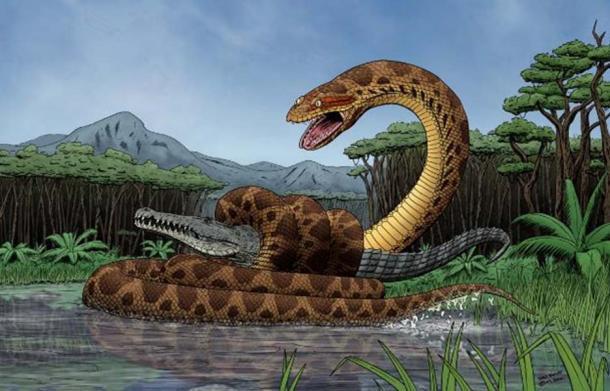 Titanoboa - Mãng xà cổ đại: Dài gấp đôi Anaconda, chuyên làm thịt cá sấu tiền sử - Ảnh 5.