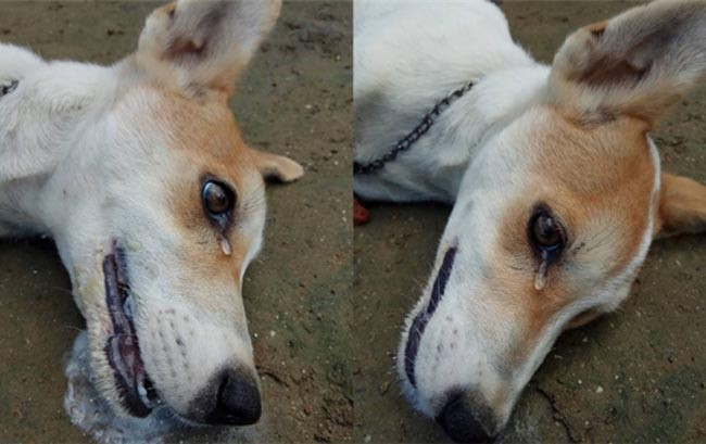 Chuyện cảm động về khoảnh khắc chú chó hy sinh cứu hàng chục người và đàn con nhỏ - Ảnh 2.