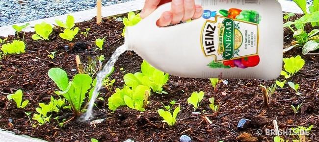 Con gái dùng giấm đổ vào đất trong vườn, bà mẹ phát hoảng vì sợ hỏng đất trồng rau nhưng vài ngày sau mới bất ngờ vì kết quả - Ảnh 1.