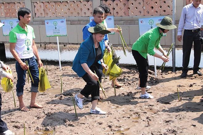 Quỹ Một triệu cây xanh cho Việt Nam về tới đất Mũi Cà Mau - Ảnh 1.