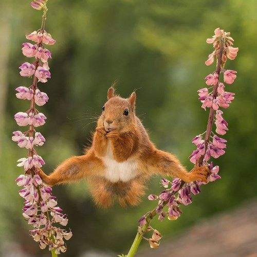 Những bức ảnh siêu hài hước về động vật đầu năm 2018 - Ảnh 1.