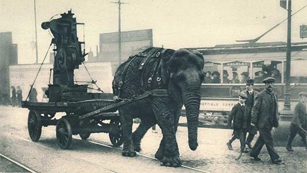 Những con voi trong chiến tranh: Cỗ xe tăng đáng sợ của giới quân sự cổ đại - Ảnh 6.