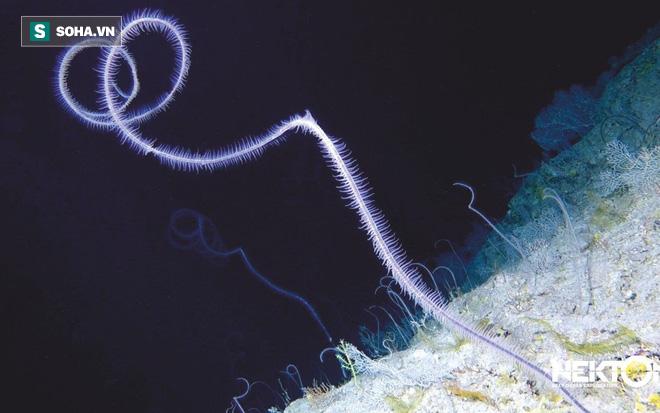 Bí ẩn sinh vật tại đáy biển Bermuda: Giới khoa học chưa từng thấy bao giờ - Ảnh 1.