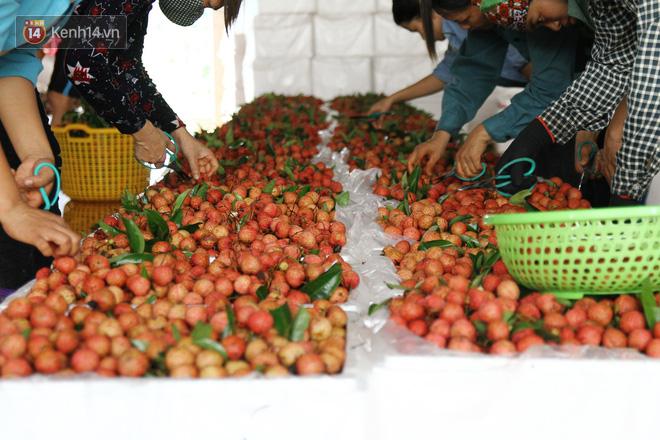Về Bắc Giang thăm người dân Lục Ngạn trước thông tin 10 ngàn 3kg vải thiều: Làm gì có chuyện chúng tôi ném vải xuống sông - Ảnh 4.