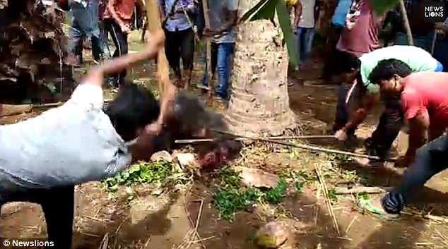 Gấu mò vào làng tấn công, gây thương vong lớn cho người dân - Ảnh 2.