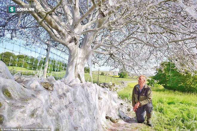 Cái cây kỳ lạ bên bờ sông nước Anh, không bệnh tật nhưng toàn thân hóa màu trắng muốt - Ảnh 1.