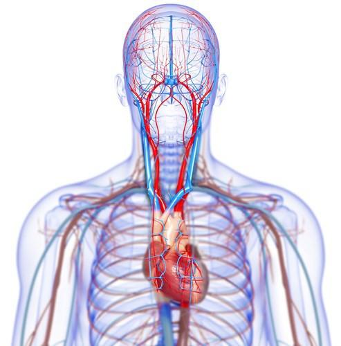 Dấu hiệu bệnh tim có thể được nhìn thấy bằng mắt thường - Ảnh 3.