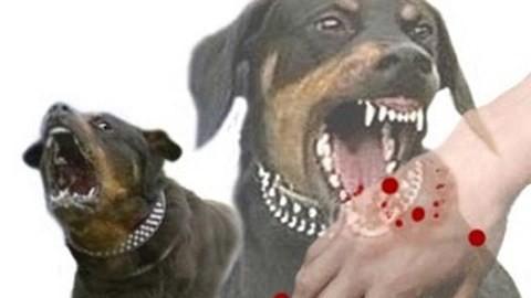 Chó dại cắn vài năm vẫn phát bệnh, phải tiêm phòng khi bị chó cắn - Ảnh 1.