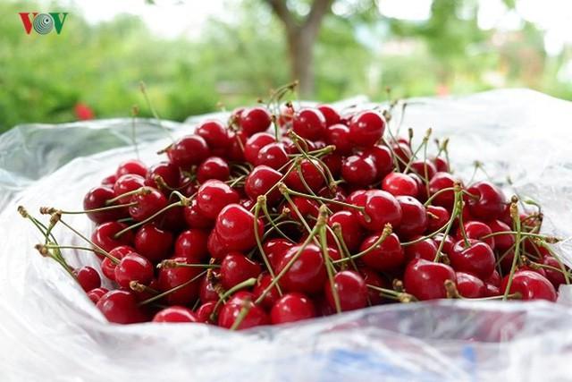 Trái cây ngoại siêu đắt ở Việt Nam là cây dại ở nước ngoài? - Ảnh 1.