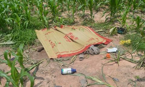 Đôi nam nữ chết trong ruộng ngô sau tiếng kêu cứu - Ảnh 1.