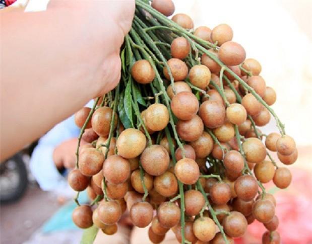 Chuyên gia Đông y tiết lộ: Thứ quả vàng mùa hè là vị thuốc rất quý nhiều người đang để phí - Ảnh 1.