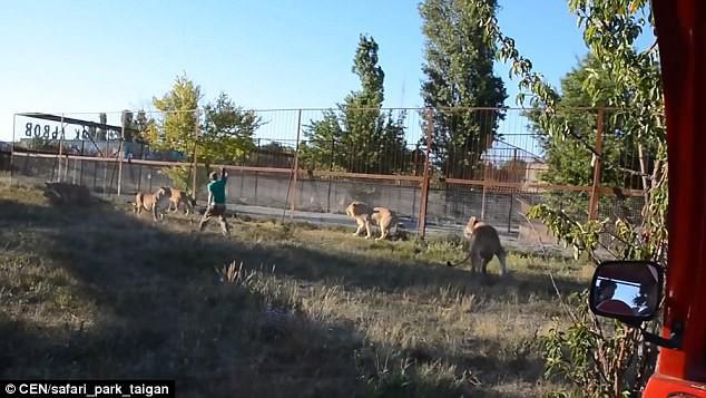 Clip: Thấy bầy sư tử gây lộn đánh nhau, chú trung niên rút dép vả mỗi con một phát - Ảnh 3.
