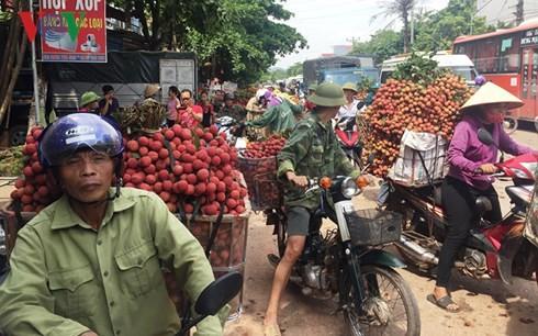 """Thương nhân Trung Quốc đổ xô sang Việt Nam """"săn"""" vải thiều Lục Ngạn - Ảnh 1."""