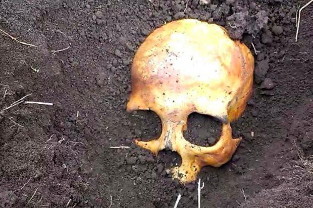 Đào được hộp sọ trong vườn, người đàn ông phát hiện sự thật kinh hoàng - Ảnh 1.