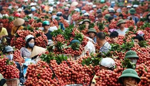 Người bán 400 tấn cam/ngày ở chợ Long Biên: Thương lái TQ biết VN có gì ngon nhất - Ảnh 2.