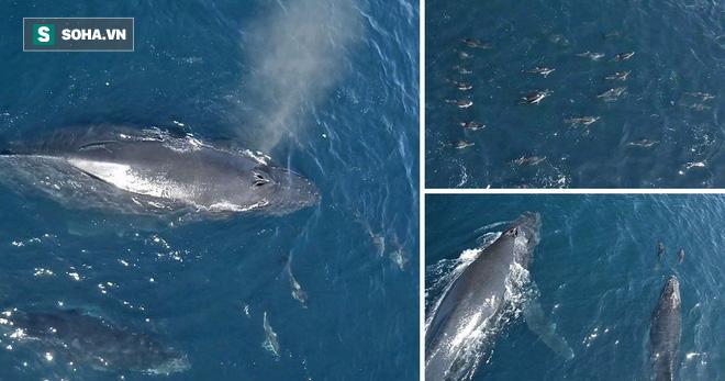 1.500 con cá heo bao vây mẹ con cá voi lưng gù: Nguyên nhân đằng sau làm ai cũng bất ngờ - Ảnh 1.