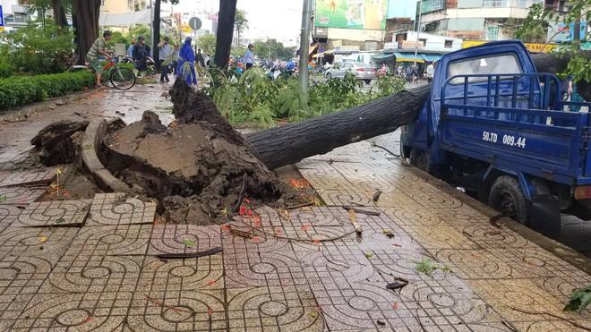 Sài Gòn xuất hiện gió lốc lớn, nhiều cây xanh bị quật ngã bật gốc - Ảnh 4.