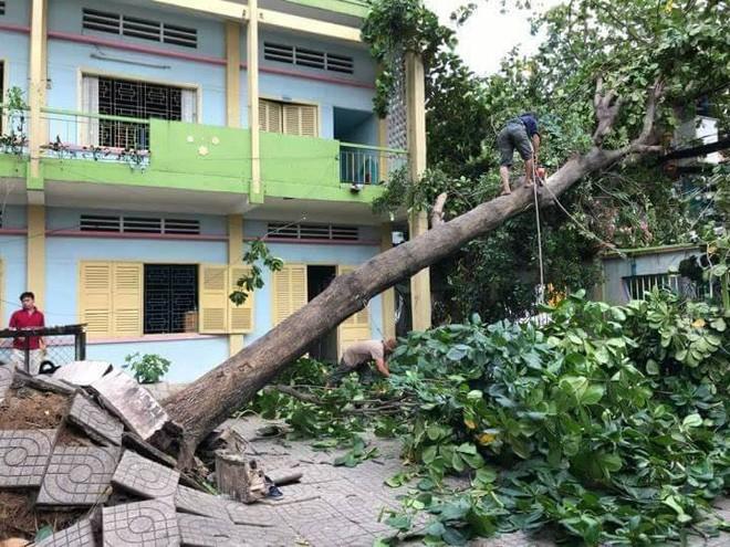 Sài Gòn xuất hiện gió lốc lớn, nhiều cây xanh bị quật ngã bật gốc - Ảnh 5.