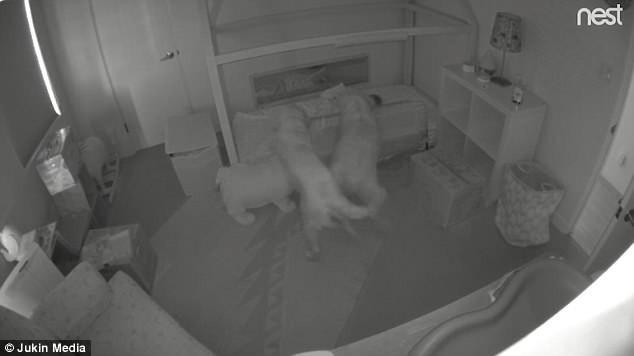Đặt camera trong phòng, cha mẹ choáng khi phát hiện ra con gái có bạn chơi đêm - Ảnh 2.