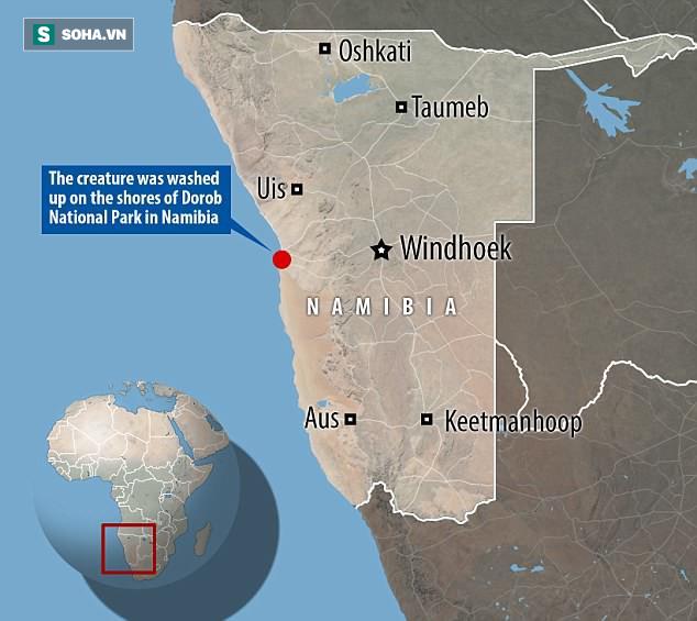 Bí ẩn sinh vật nửa cá voi - nửa cá heo ở biển Namibia khiến các nhà khoa học bối rối - Ảnh 1.