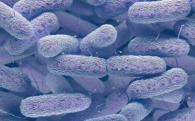 Loại khuẩn gây chết người trong 1 ngày này có thể bùng nổ khi cơn ác mộng kháng kháng sinh ập đến - Ảnh 2.