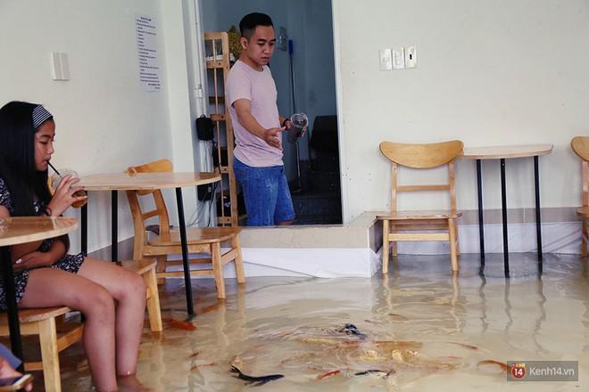 Chủ quán cafe Sài Gòn cho khách cởi giày, ngâm chân dưới hồ cá: Có nội quy cho khách, chúng tôi còn cử 8 nhân viên túc trực 24/24 theo dõi cá - Ảnh 15.