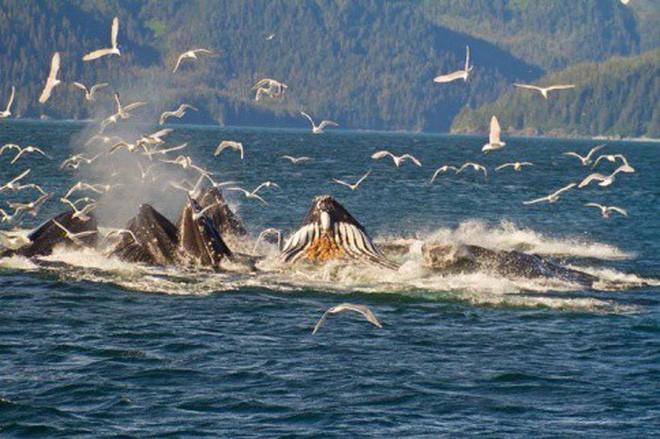 Chuyện gì xảy ra khi cá voi chết đi? Nằm lại dưới đáy biển, nó vẫn có ích đến hàng chục năm sau - Ảnh 3.