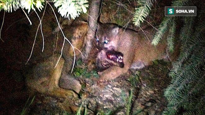 Nghe tiếng động, nhóm cắm trại chiếu đèn vào bụi cây, phát hiện cảnh tượng ám ảnh - Ảnh 1.