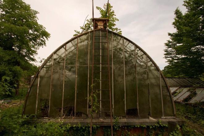 Bên trong khu vườn bị bỏ hoang ở Paris, nơi 100 năm trước con người từng bị đem ra triển lãm, mua vui chẳng khác gì ở sở thú - Ảnh 17.