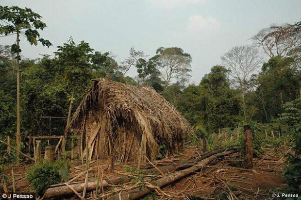 Thổ dân cuối cùng của một bộ lạc sống đơn độc trong rừng Amazon suốt 22 năm - Ảnh 1.