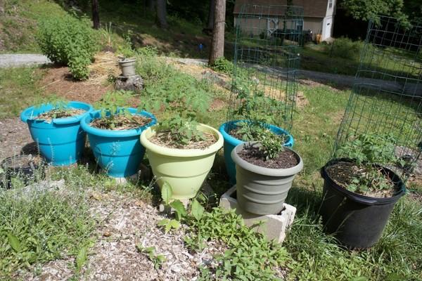 Vùi 1 quả trứng, 1 quả chuối xuống đất - mẹo hay không nên bỏ qua dành cho người làm vườn - Ảnh 1.