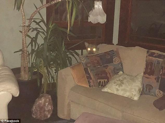 Phát hiện sư tử ghé thăm và ngủ trên ghế suốt 6 tiếng, chủ nhà đã làm 1 việc đáng nể - Ảnh 1.