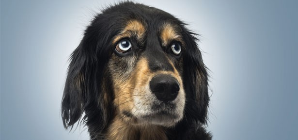 Thêm một lý do để nuôi chó: Chúng sẽ đến bên chủ nếu như chúng ta khóc - Ảnh 3.
