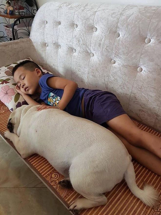 Chăm boss 2 năm ròng, sen ngã ngửa khi một ngày thấy mình nuôi nhầm con... lợn - Ảnh 1.