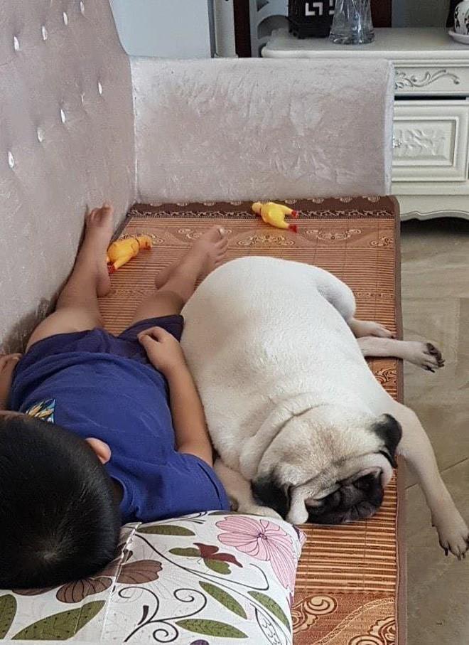 Chăm boss 2 năm ròng, sen ngã ngửa khi một ngày thấy mình nuôi nhầm con... lợn - Ảnh 5.