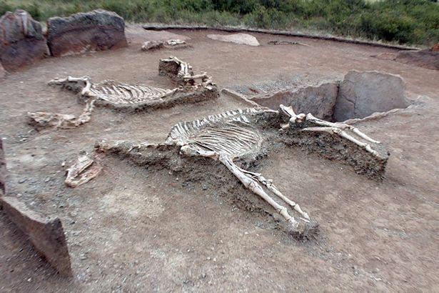 """Phát hiện hài cốt đôi tình nhân chôn cạnh nhau tựa """"Romeo và Juliet"""" thời cổ đại - Ảnh 1."""
