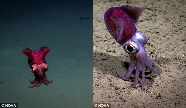 Sinh vật bánh bao, mực đổi màu hay nhiều loài kỳ lạ dưới lòng biển sâu - Ảnh 3.