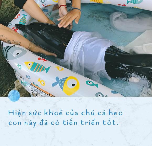 Ba ngày kỳ diệu của Lucky - Em bé cá heo bị thương trôi dạt vào bờ biển và hồi sinh nhờ những người tử tế - Ảnh 11.