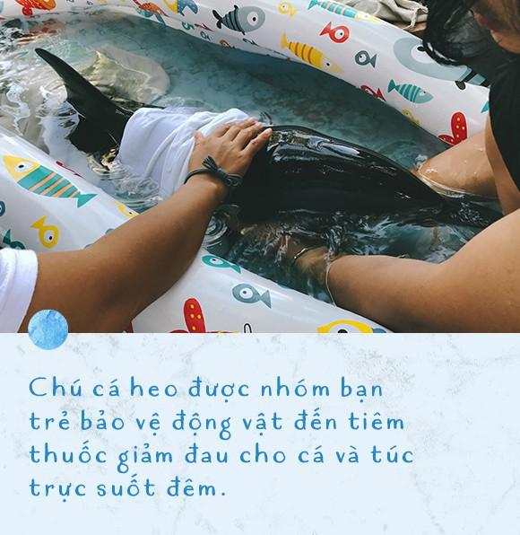 Ba ngày kỳ diệu của Lucky - Em bé cá heo bị thương trôi dạt vào bờ biển và hồi sinh nhờ những người tử tế - Ảnh 9.