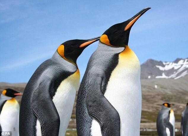 Vương quốc chim cánh cụt lớn nhất thế giới đã sụp đổ một cách bí ẩn mà khoa học vẫn không hiểu tại sao - Ảnh 4.