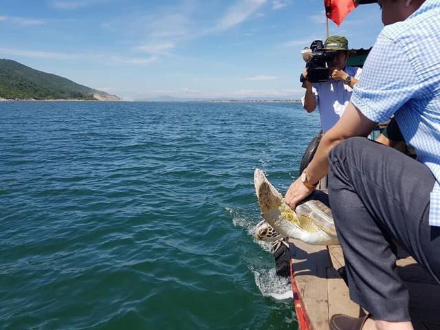 Hà Tĩnh: Thả rùa biển vô cùng quý hiếm về tự nhiên - Ảnh 1.