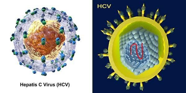 Viêm gan C: Tăng nguy cơ mắc ung thư gan và các bệnh ung thư khác - Ảnh 2.