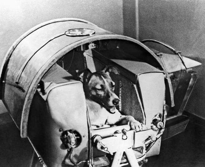 Sứ mệnh có 1-0-2 của 3 chú chó phi hành gia Liên Xô: Laika chết khi tròn 3 tuổi - Ảnh 4.