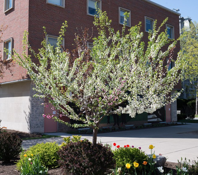 Mời bạn chiêm ngưỡng cái cây kì diệu tạo ra tới 40 thứ quả trong một năm - Ảnh 1.