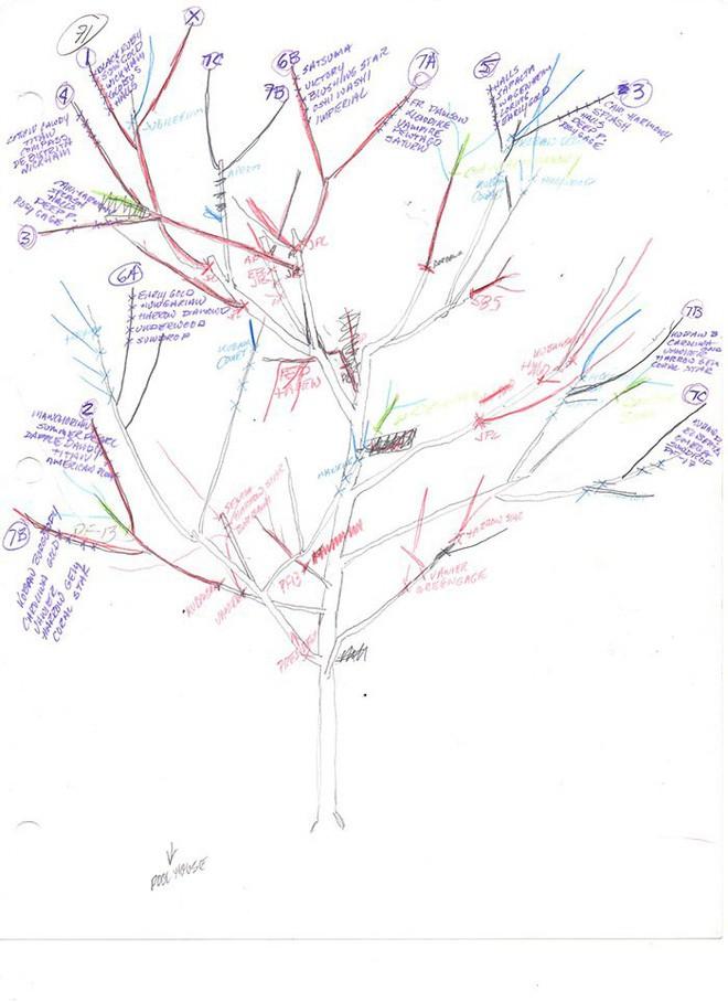 Mời bạn chiêm ngưỡng cái cây kì diệu tạo ra tới 40 thứ quả trong một năm - Ảnh 2.