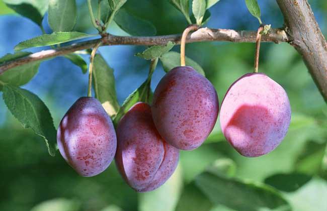 Đông y coi đây là 5 thực phẩm vua giải độc gan tự nhiên: Loại bỏ chất độc làm hỏng gan - Ảnh 5.