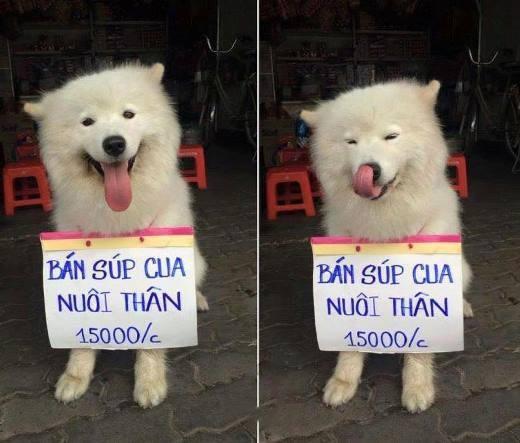 Chú chó nhỏ đội mũ chống nắng, hớn hở ngồi bán sầu riêng khiến dân mạng thích thú - Ảnh 4.