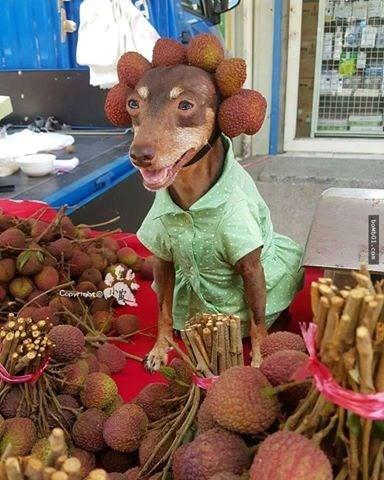 Chú chó nhỏ đội mũ chống nắng, hớn hở ngồi bán sầu riêng khiến dân mạng thích thú - Ảnh 8.